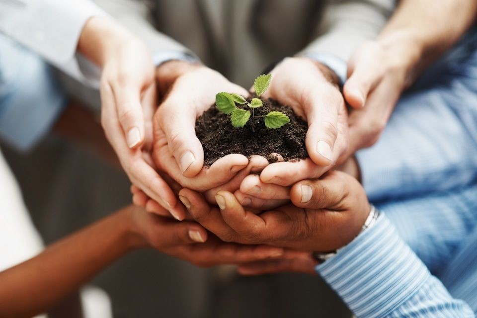 photodune-202925-business-development-hands-holding-seedling-in-a-group-m7